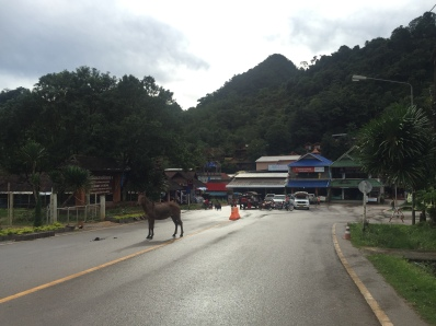 The village, even with its own dogs and donkeys!