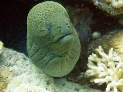 A surprised moray eel