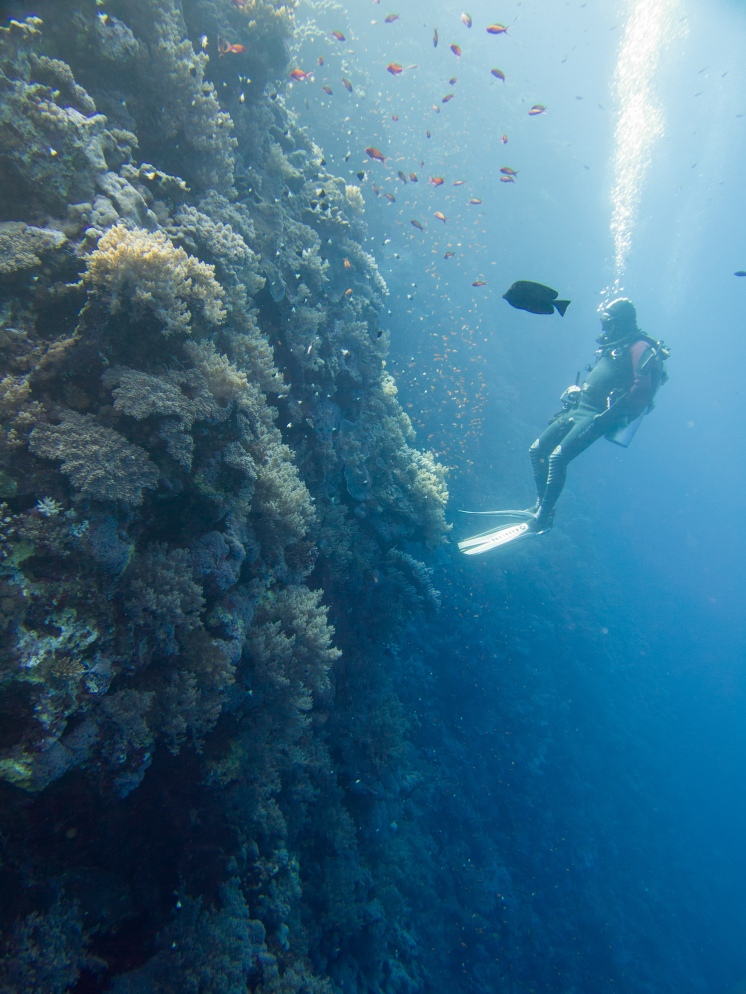 The walls were steep and beautifully covered with coral