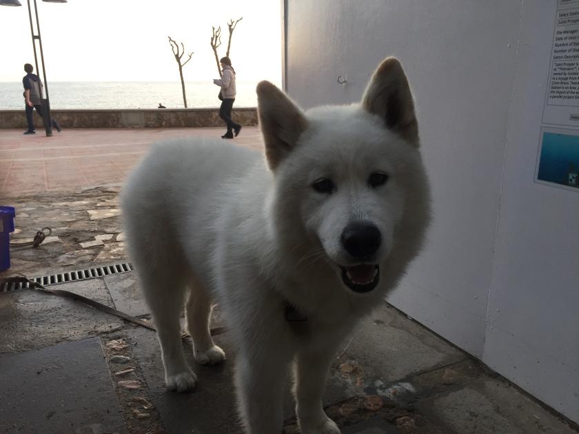 GUE-dog