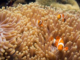 More Nemo's