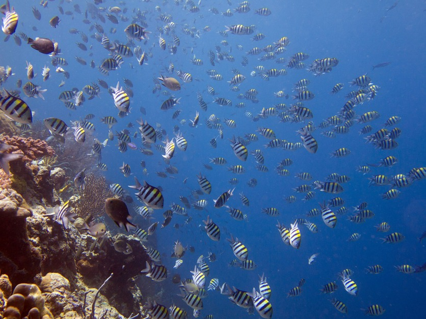 The amount of fish underwater is amazing