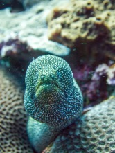 A moray eel seemingly surprised by our visit