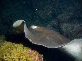 and huge stingrays!